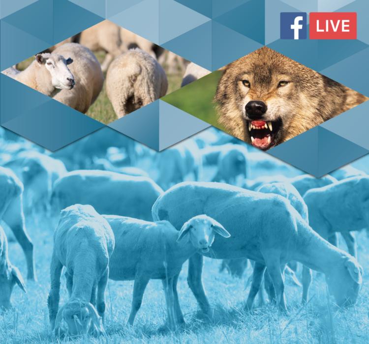 Forum Wolf als Live-Stream bei Facebook
